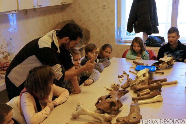 Opowiadanie o kościach zwierząt