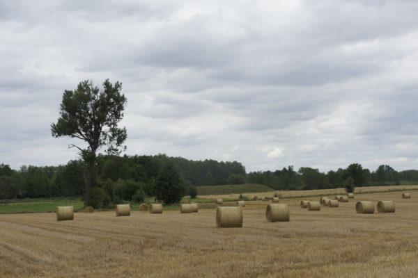 krajobraz z Tańska-Przedborów. Widok na grodzisko